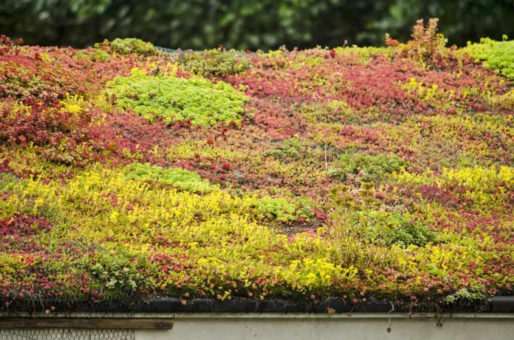 Lening voor een groen dak simuleren