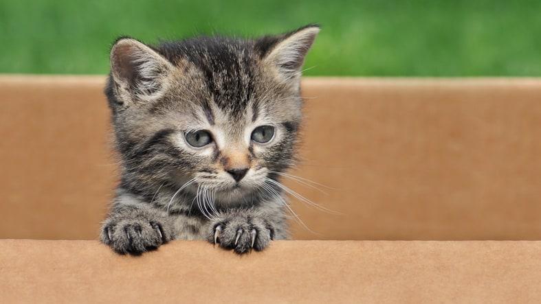 Verzekering voor je kat